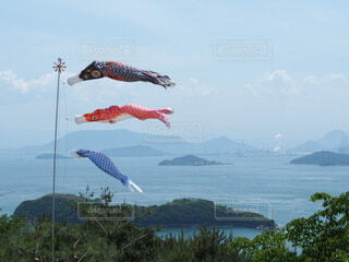 瀬戸内海のこいのぼりの写真・画像素材[4076374]