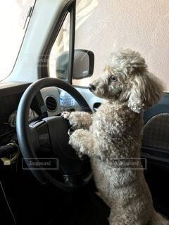 運転する犬の写真・画像素材[4078942]
