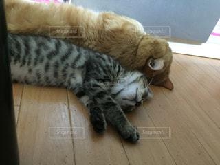 猫が好きの写真・画像素材[171790]
