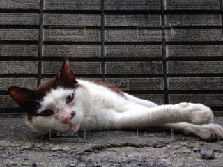 猫の写真・画像素材[172441]