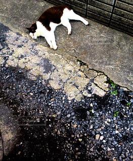 猫の写真・画像素材[172447]