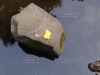 黄色の写真・画像素材[173625]