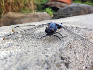 虫の写真・画像素材[180467]