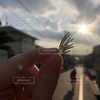 掴む光の写真・画像素材[4076675]