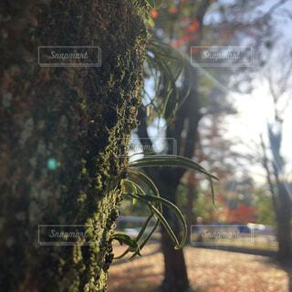 木と苔と日差しとの写真・画像素材[4076682]