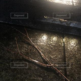 雨上がりの小枝の写真・画像素材[4076683]