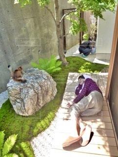 祖母、お昼寝。の写真・画像素材[4096973]