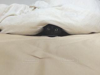 猫,かわいい,かくれんぼ,黒猫,目線,ふとん