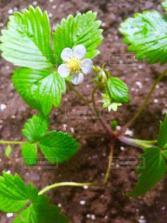 花の写真・画像素材[172245]