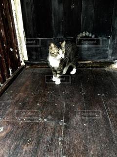 猫 - No.172269