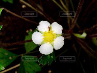 花の写真・画像素材[175832]