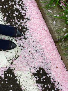 春 - No.344884