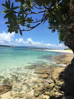 ヤシの木とビーチの写真・画像素材[1249427]