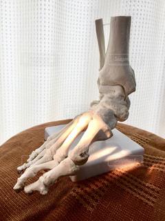 足の骨の写真・画像素材[1258671]