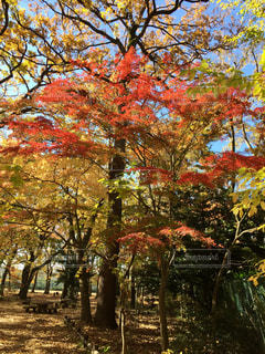 公園の木の写真・画像素材[1660322]