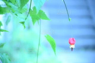 階段の前で咲くひとつのお花の写真・画像素材[4110640]