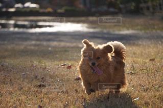犬の写真・画像素材[173398]