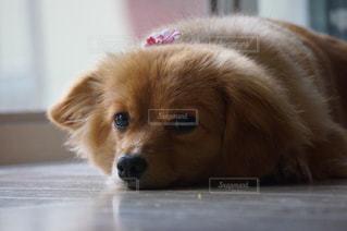 犬の写真・画像素材[174197]