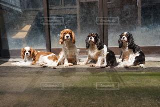 犬の写真・画像素材[407567]