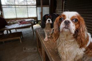 犬の写真・画像素材[407571]