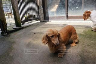 犬の写真・画像素材[407572]