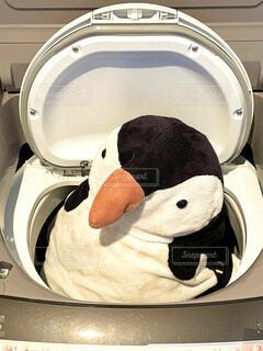 洗濯機に入れられたペンギンのぬいぐるみの写真・画像素材[4155936]