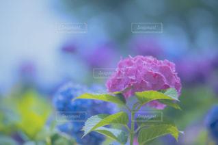 花の写真・画像素材[551647]