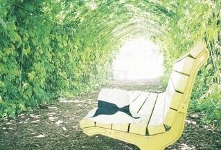緑のトンネルの中のベンチの写真・画像素材[4130858]
