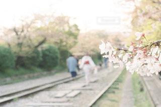 桜と着物姿で線路を歩く人の写真・画像素材[4130857]