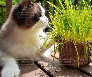 日向ぼっこしている猫の横顔の写真・画像素材[4631649]