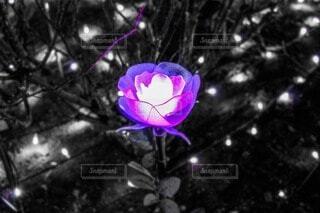 花の写真・画像素材[4095629]
