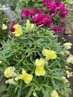 花の写真・画像素材[4097494]