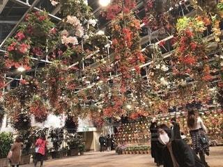 なばなの里のお花の写真・画像素材[4097987]