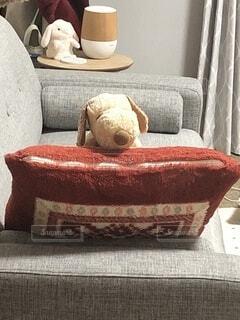 ソファに座っているぬいぐるみの写真・画像素材[4097984]