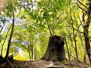 森の中の切り株の写真・画像素材[4347640]