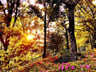 森の真ん中にある木の写真・画像素材[4467039]