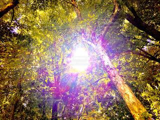 森の眺めの写真・画像素材[4703146]