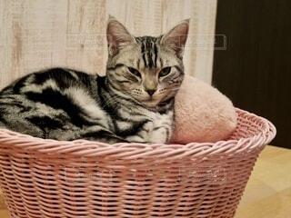今にも眠たそうな猫の写真・画像素材[4105299]