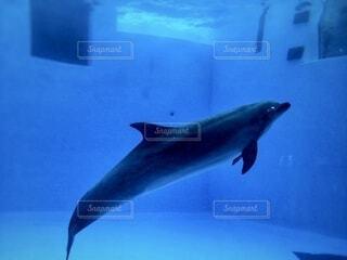 水族館のイルカの写真・画像素材[4151582]