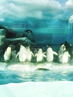 たくさんのペンギンが並んで羽を乾かすの写真・画像素材[4198739]