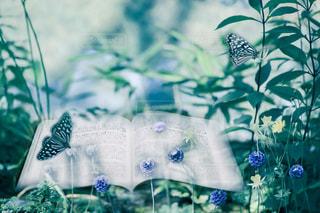 花の写真・画像素材[174526]