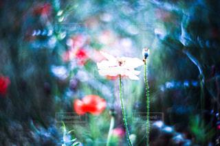 お花畑 - No.174768