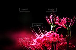 近くの花のアップ - No.790893
