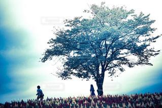 木の隣に立っている人のグループの写真・画像素材[790894]