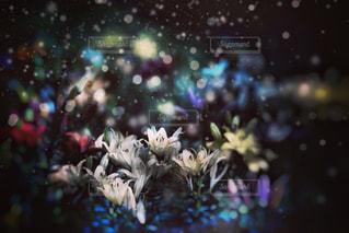 近くの花のアップの写真・画像素材[790902]