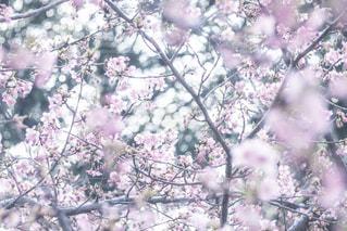 木の枝にとまった鳥の写真・画像素材[1106806]