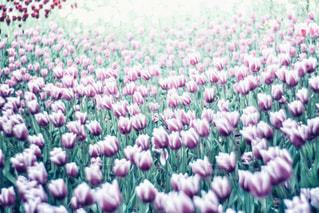 近くの花のアップの写真・画像素材[1106811]