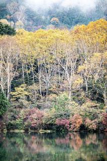 木々に囲まれた水の体の写真・画像素材[2138104]