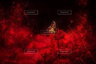 夜の赤い光のクローズアップの写真・画像素材[2138124]