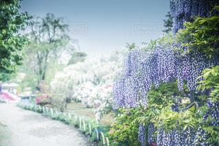 庭の植物の写真・画像素材[2138176]